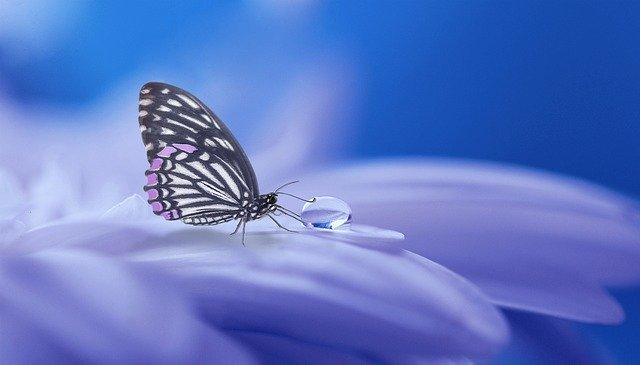 Le papillon où la métamorphose incarnée.