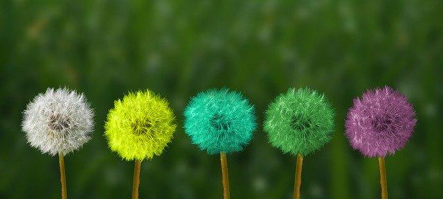Changer de couleur et briller, malgré une origine commune.